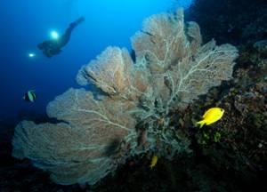 Filippine arcipelago da sogno - Dive time tours ...