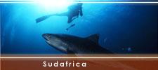 Immersioni subacquee in sudafrica a tu per tu con gli squali - Bagno con gli squali sudafrica ...