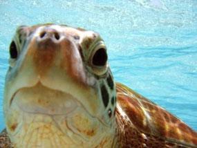 Crociera a tubbataha reef a bordo di atlantis azores - Dive time tours ...