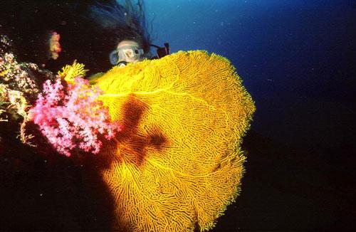 Micronesia articolo su scubaportal portale subacqueo immersioni diving attrezzatura sub - Dive time tours ...