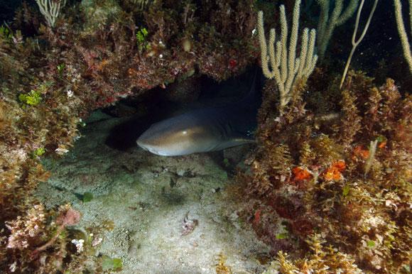 squalo cuba